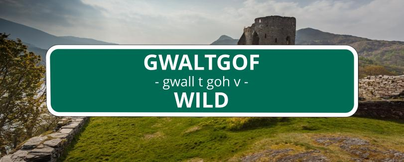 35 funny welsh words and what they mean