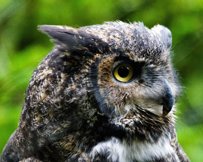 35 funny welsh words and what they mean 20 funny welsh words and what they mean Owl Image by Geoffrey Whiteway